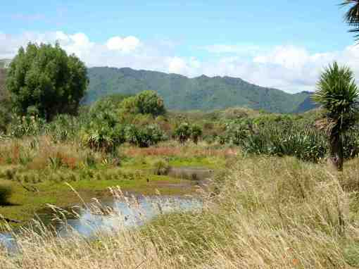 wetland by Waikanae River