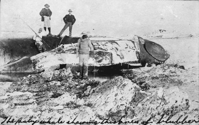 Perano – the last whaling station in NewZealand (2/2)