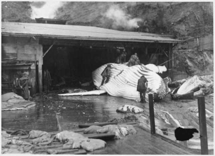 Perano – the last whaling station in NewZealand (1/2)