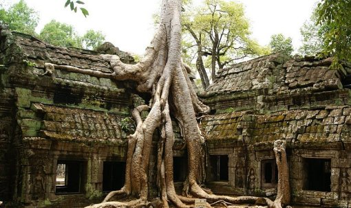 A temple-eating tree at Ta Prohm, Cambodia