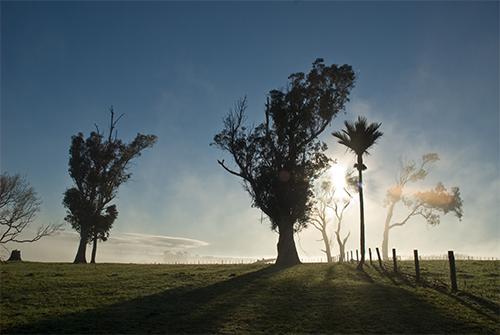 Nikaunui morning by Paul Knight