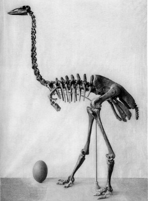 When did the moa become extinct?