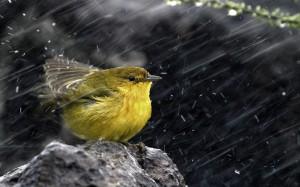 Bird in rain