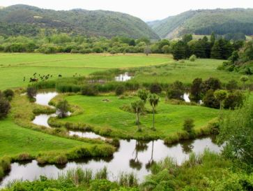 Wetlands below Ashhurst Domain, on a site that was once the course of the Pohangina River