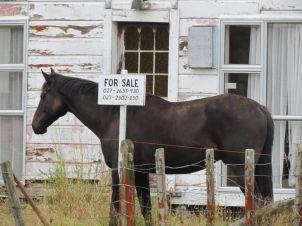 Apiti horse