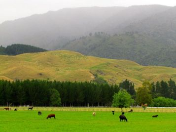 Farmscape near Piripiri in the upper Pohangina Valley East Road