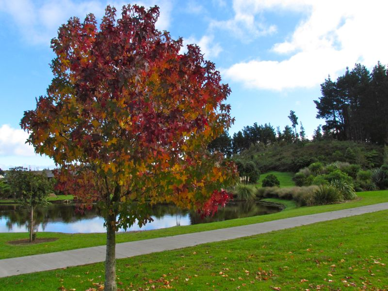 Environment and culture envirohistory nz for Evergreen landscapes christchurch
