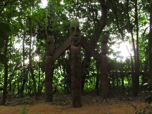 Karaka grove