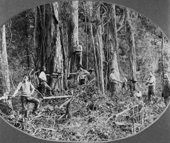 Bushfelling in the Pohangina Valley 1904