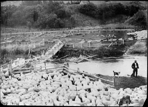 A sheep farm c1910 - 20. Unknown location in the Manawatu. Possibly taken by Charles Wildbore of Pohangina. Palmerston North City Libraries