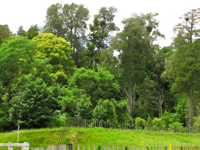 Bruce Park Reserve10