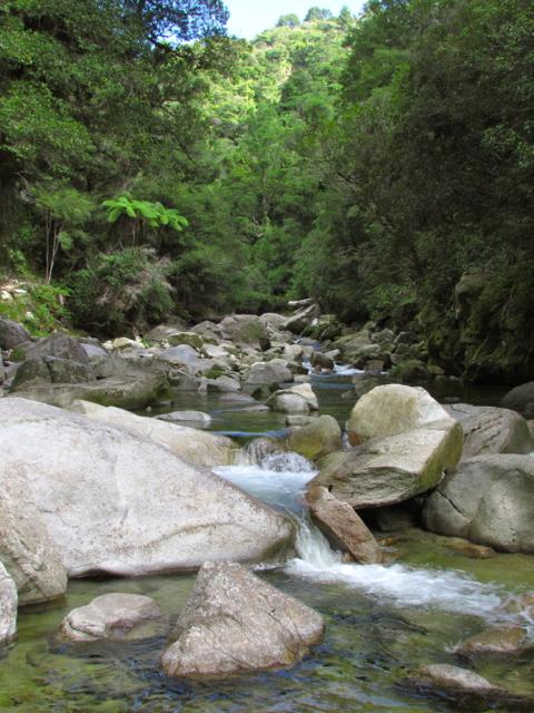 Wainui River 1