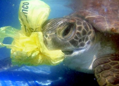 turtle choking on plastic bag