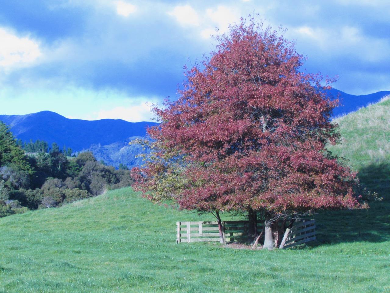 Oak tree web.jpg