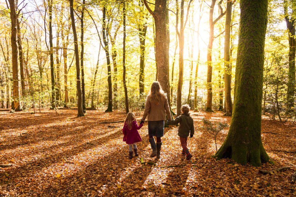 walking in autumnal woodland.jpg